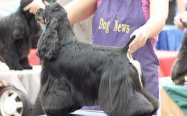Just4paws Dog Grooming Courses Eastbourne And Brighton